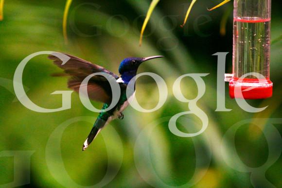 Google Hummingbird Algorythmus Update